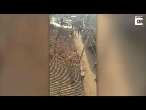 صوت الإمارات - هجوم نمر يجبر عامل إنقاذ على القفز من فوق سطح منزل