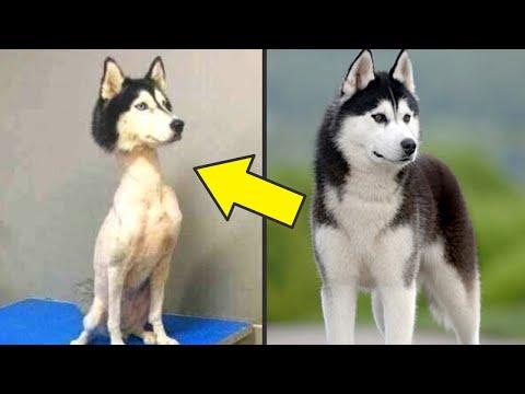 صوت الإمارات - شاهد 12 حيوانًا يتغير شكله كليًا بعد تساقط شعره