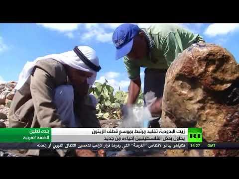 صوت الإمارات - شاهد زيت البدودية تقليد مرتبط بقطاف الزيتون