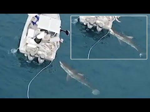 صوت الإمارات - لحظة هجوم قرش أبيض ضخم على قارب صيد