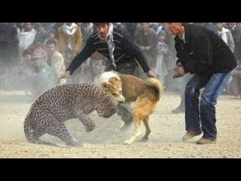 صوت الإمارات - شاهد 10 معارك جنونية بين الحيوانات تحت شعار البقاء للأقوى