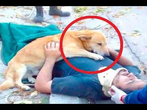 صوت الإمارات - شاهد كلاب وفية لأصحابها حتى النهاية