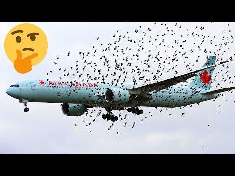 شاهد أغرب 10أسئلة عن الطائرات