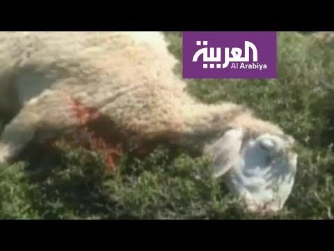 شاهد  مستوطنون إسرائيليون يعذِّبون شاه حتى الموت