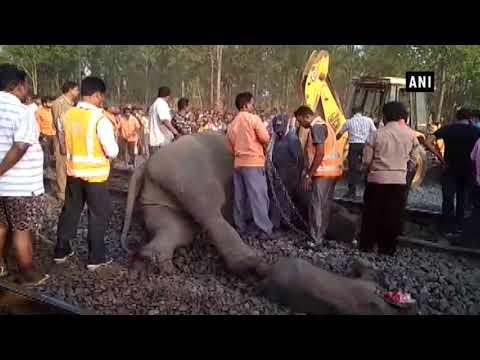 شاهد قطار اصطدم بقطيع من الحيوانات