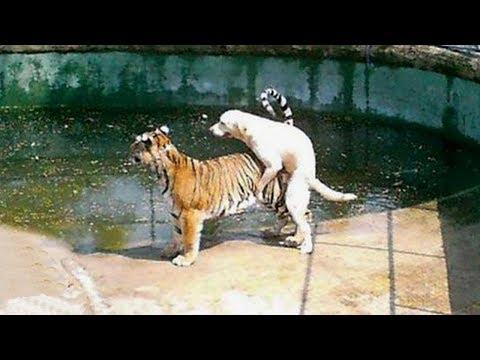 شاهد صداقات غير عادية حدثت بين الحيوانات