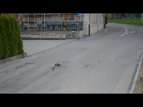 شاهد بطة تتخطى السرعة المسموحة في سويسرا