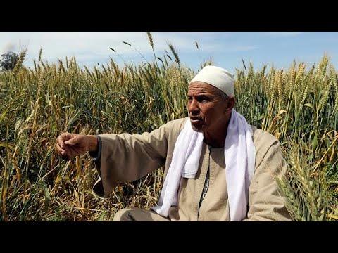 مزارعون مصريون يواجهون مصيرًا مجهولًا