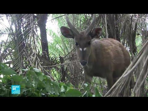 شاهدجهود لإنقاذ الحيوانات النادرة في بنين