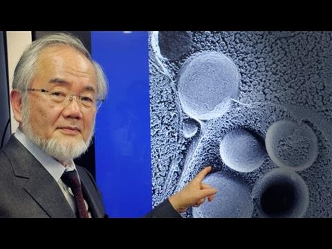 selfeating cell research wins nobel