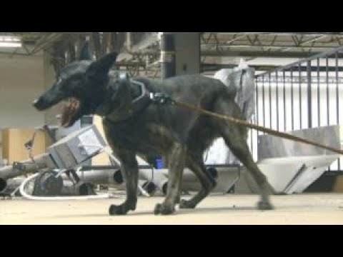 protecting k9 units from accidental