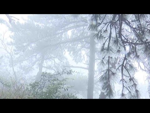 cold wave turns east china into winter