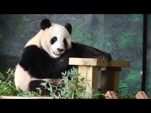 panda pair to arrive in finland this month