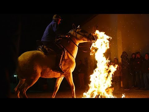 horses gallop through bonfires at spanish festival