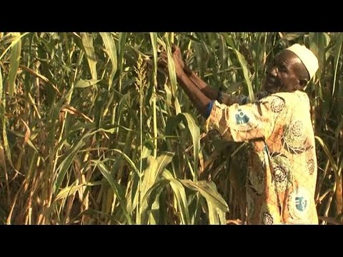 beating back the desert in burkina faso field by field