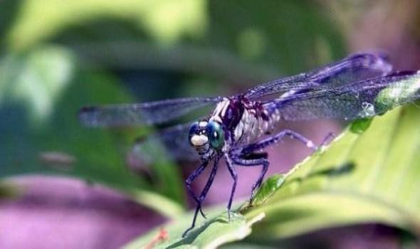 صوت الإمارات - تفسير حلم رؤية الحشرات في المنام