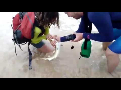 صوت الإمارات - بالفيديو  مشاهد مرعبة لمحاولة التقاط صورة شخصية مع قرش