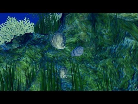 صوت الإمارات - بالفيديو  زيادة حموضة المحيطات