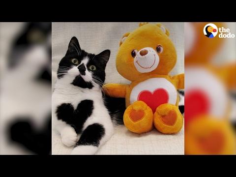 صوت الإمارات - بالفيديو زوي قطة صغيرة ولدت بقلب مميّز على صدرها