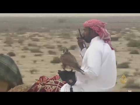 صوت الإمارات - بالفيديو انطلاق بطولة القلايل للمقناص في دولة قطر