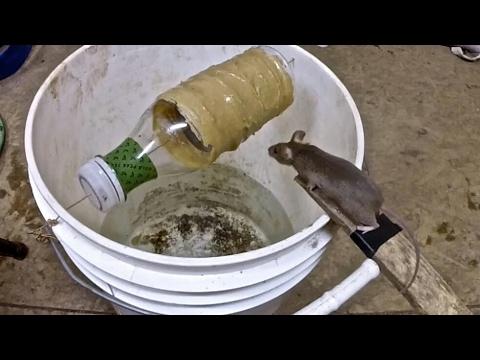 صوت الإمارات - شاهد كيف يصطادون الفئران بطريقة خرافية