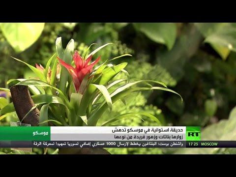 صوت الإمارات - بالفيديو حديقة استوائية تستقطب أهالي موسكو