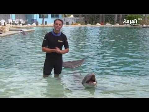 صوت الإمارات - بالفيديو تجربة السباحة مع الدلافين في سي كواريوم ميامي