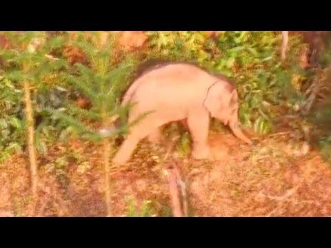 صوت الإمارات - شاهد محاولات صينية لإنقاذ فيل صغير مُصاب