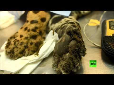 صوت الإمارات - إجراء عملية جراحة عظام لفهد أميركي في سان سلفادور