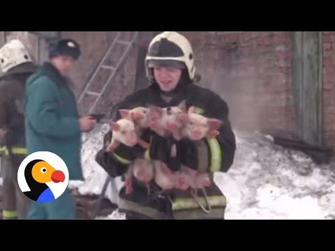 صوت الإمارات - شاهد رجال إطفاء غامروا بحياتهم من أجل الحيوانات