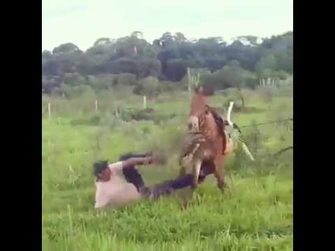 صوت الإمارات - بالفيديو حصان مذهل ينتقم من رجل أثار غضبه