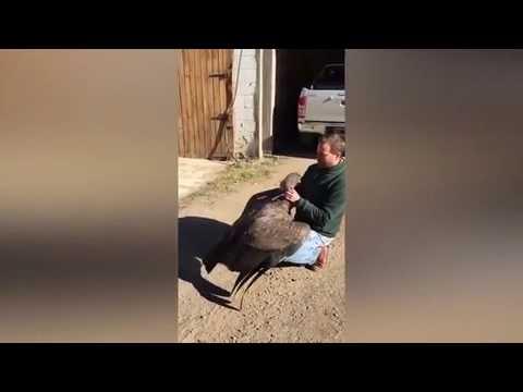 صوت الإمارات - شاهد طائر يحتضن رجلا أنقذ حياته قبل سنوات