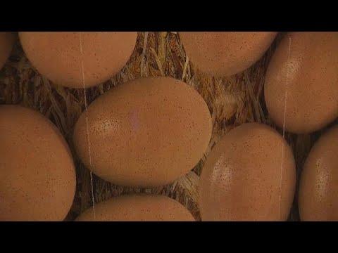 صوت الإمارات - بالفيديو سحب ملايين البيضات من رفوف المتاجر الأوروبية