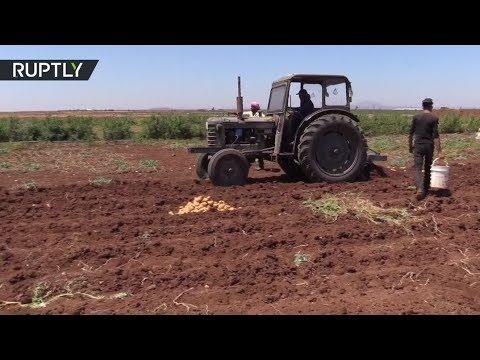 صوت الإمارات - شاهد القطاع الزراعي يبدأ بالتعافي في درعا