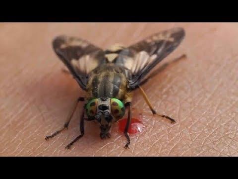 صوت الإمارات - أكثر 10 حشرات مزعجة في العالم