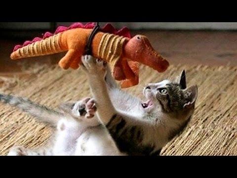 صوت الإمارات - شاهد أغرب المواقف المضحكة مع الحيوانات