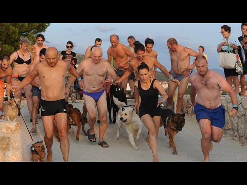 صوت الإمارات - شاهد انطلاق رالي السباحة بمعية الكلاب في كرواتيا