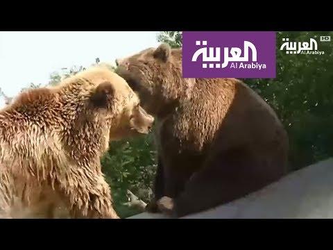 صوت الإمارات - شاهد مركز أوكراني جديد للدفاع عن الدببة