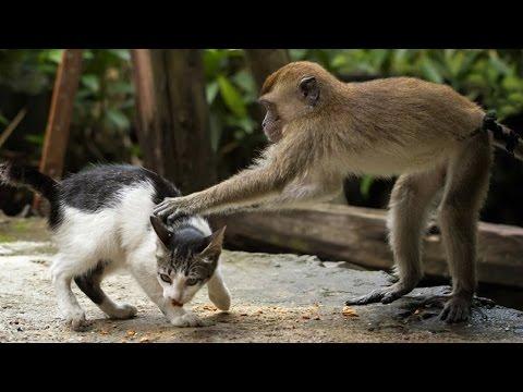 صوت الإمارات - شاهد أفضل وأطرف المقاطع الكوميدية للحيوانات