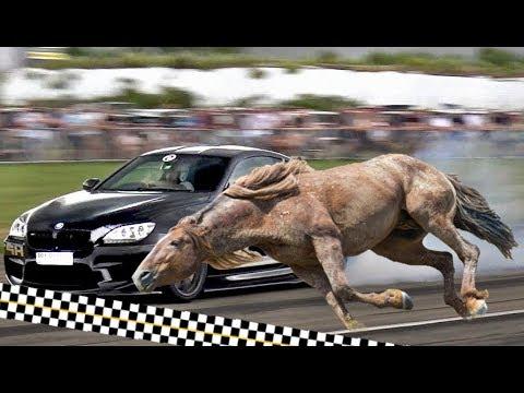 صوت الإمارات - شاهد أسرع 10 حيوانات بريّة على الإطلاق
