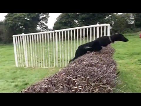 صوت الإمارات - شاهد كلب يقلد قفزة الحصان يثير ضحك روّاد مواقع التواصل