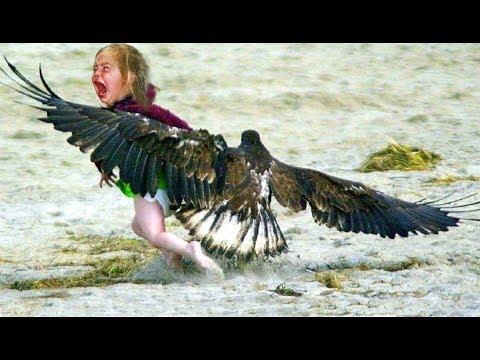 صوت الإمارات - أشرس 10 طيور في العالم