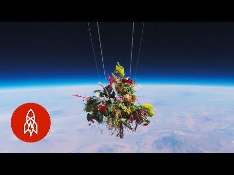 صوت الإمارات - شاهد اليابان ترسل باقة زهور إلى الفضاء الخارجي