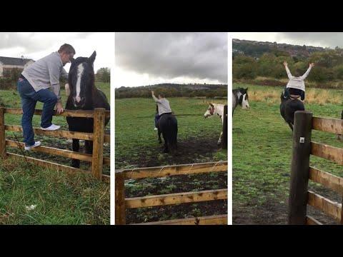 صوت الإمارات - شاهد حصان يُلقّن شابًا مخمورًا درسًا قاسيًا