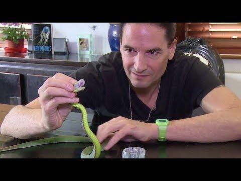 بالفيديو أبحاث جديدة على سم الثعابين الخطيرة