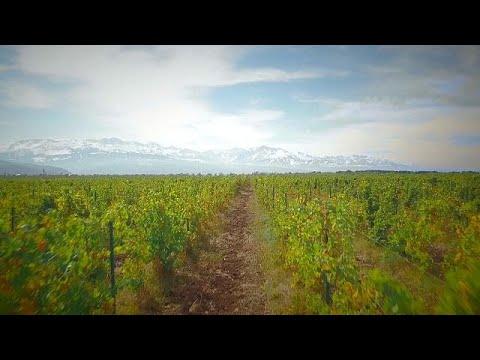 شاهد مصانع النبيذ على سفح جبال تيان شان في كازاخستان