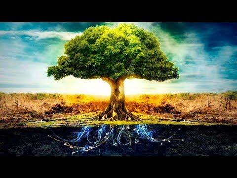 شاهد اكتشاف أشياء مذهلة بشأن الاشجار
