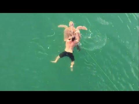 شاهد الصياد الشجاع يقفز في المياه لإنقاذه سلحفاة بحرية