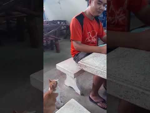 شاهد قطة تطلب الطعام بأدب تذيب قلوب الإنترنت