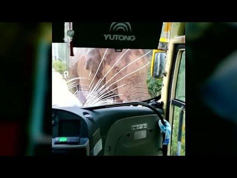 شاهد فيل يهاجم أتوبيس في الصين